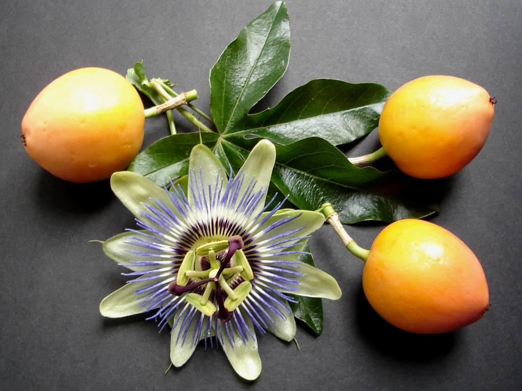 Flores On Pinterest Passion Flower Hibiscus And