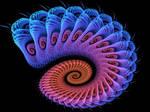 Spiral Blush