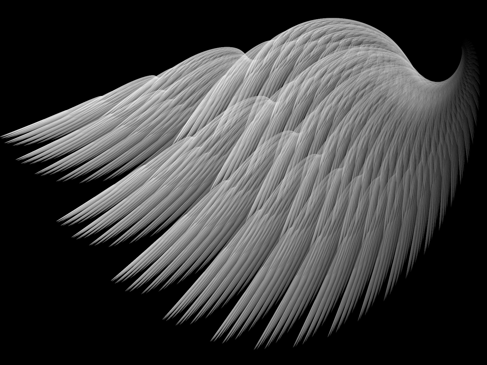 A Swans Wing by Thelma1