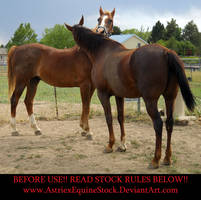 Tuck and Adina Scratch2 by AstriexEquineStock