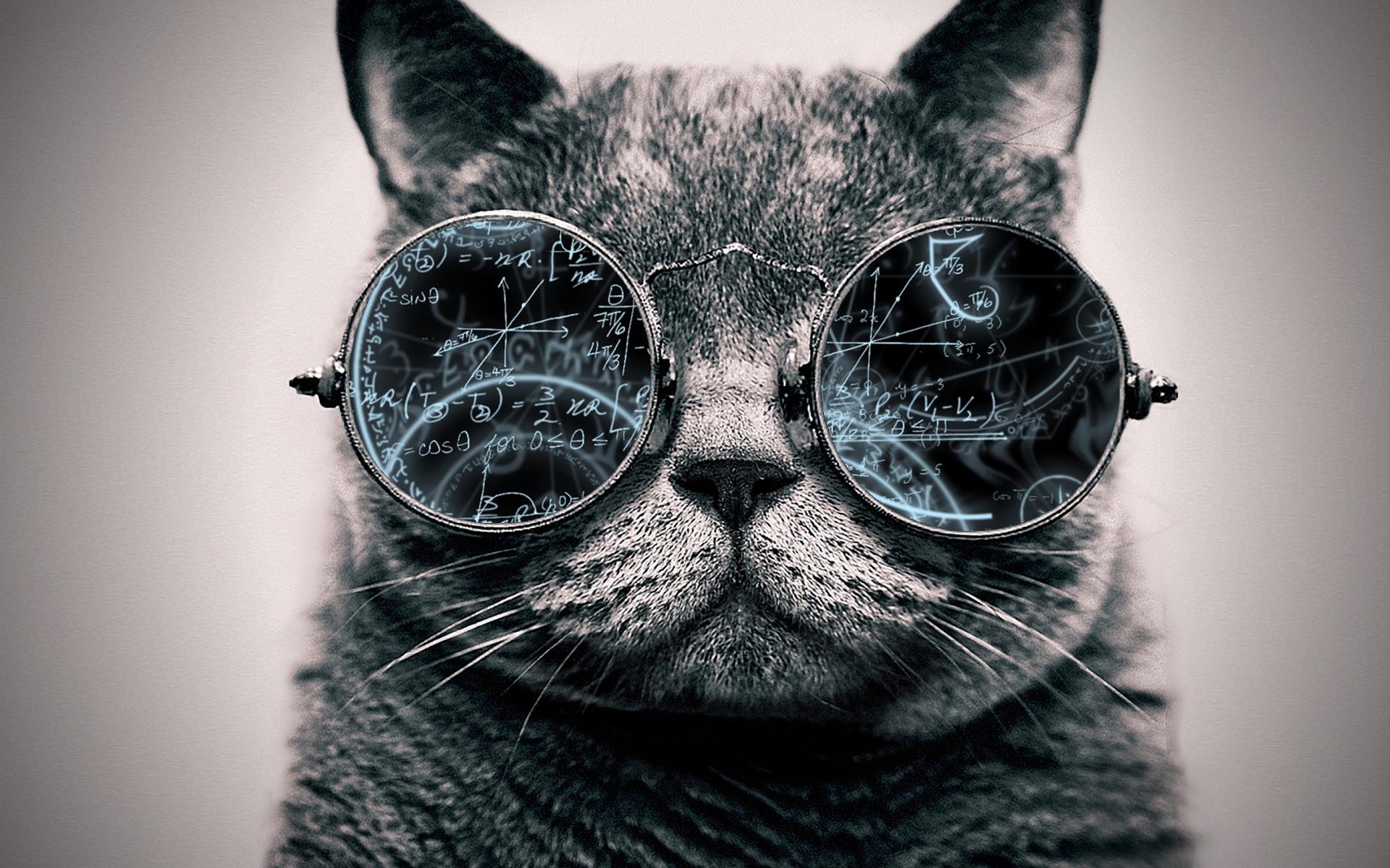 Cool Cat: Genius by ToValhalla