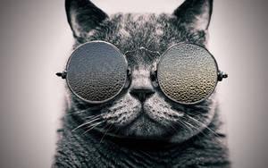 Cool Cat: Rainy