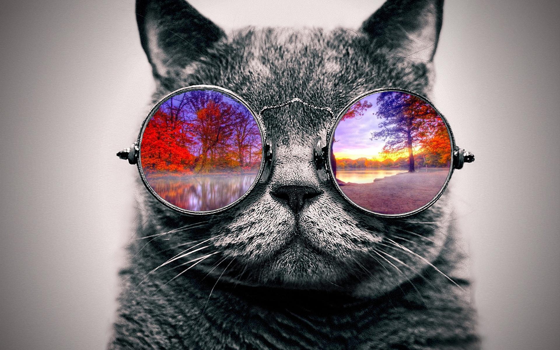 coll cat