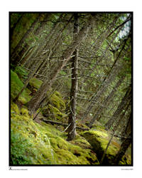 Crooked Forest by archipirata