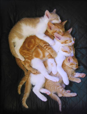 CatStack by roes