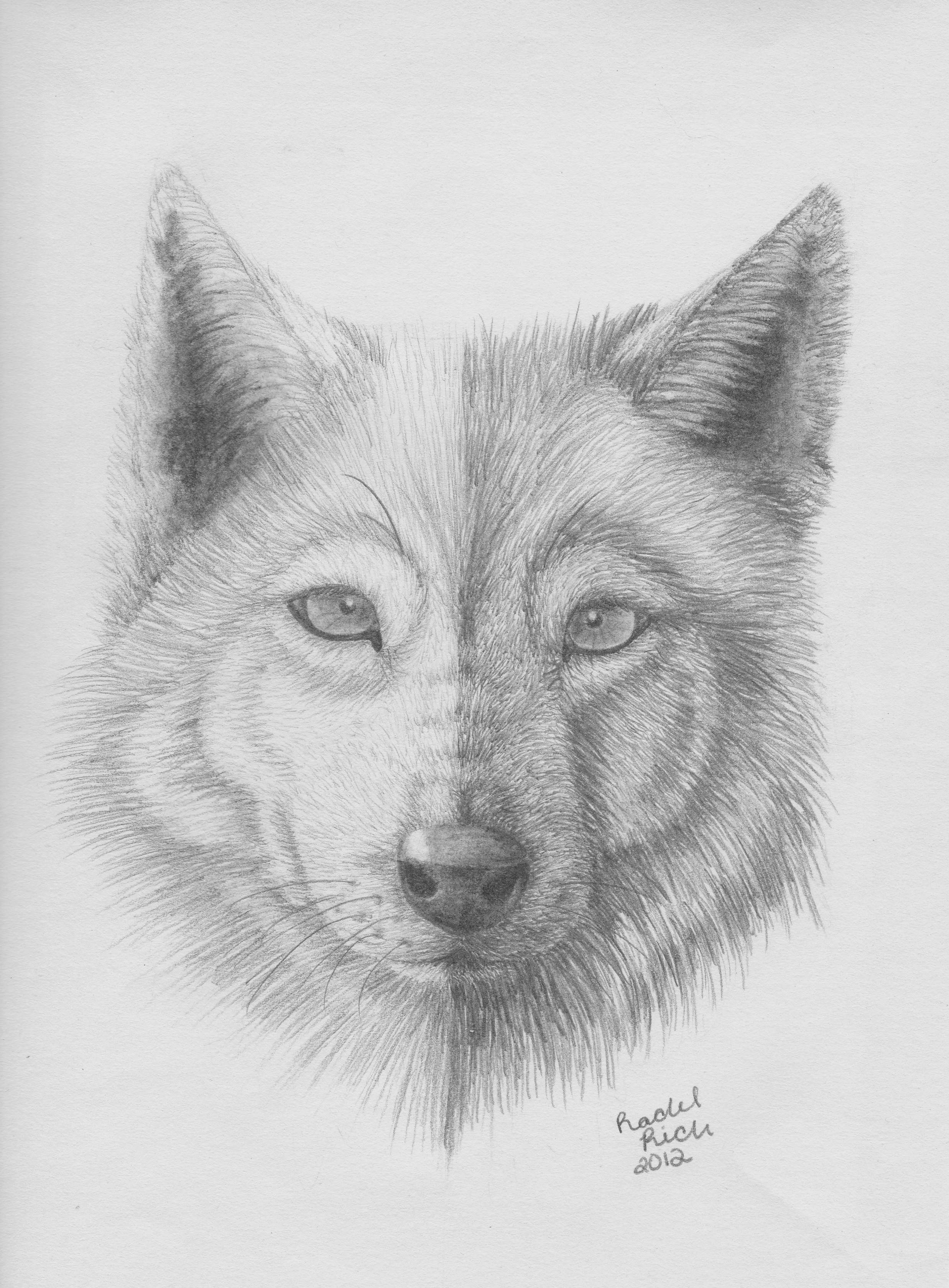 Half Black Half white wolf by RCR123
