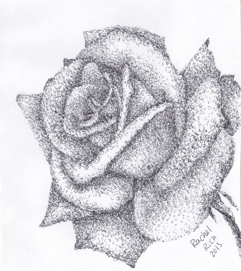 Drawing Of Scribbles : Scribble rose by rcr on deviantart