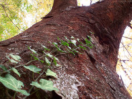 Under Trees - Ivy by AThousandRasps