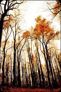 Jack's Wood