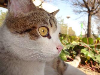 Charming eye