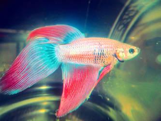 Pet fish by Ehsartem