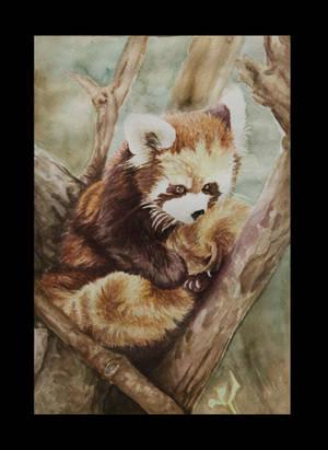 Akai Panda by otakuFrustratio-On