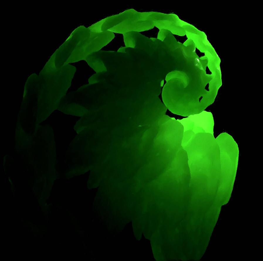 Green Dragon by dmaland