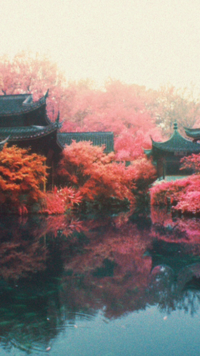Pretty Trees by QuackAlot1