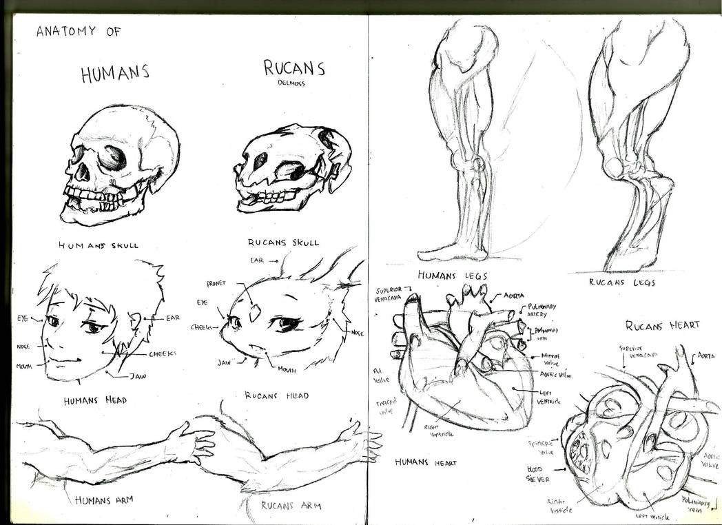 Anatomy of the rucans PROG 1 by Adry53
