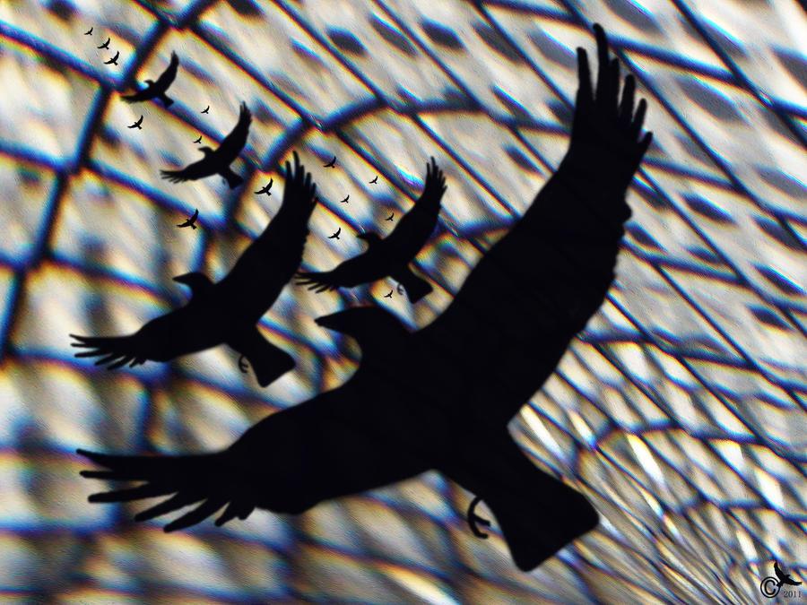 Taking flight by MODDEYDOO