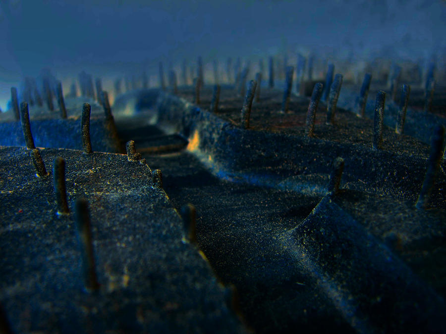 Blue Rubber Forest ... by MODDEYDOO