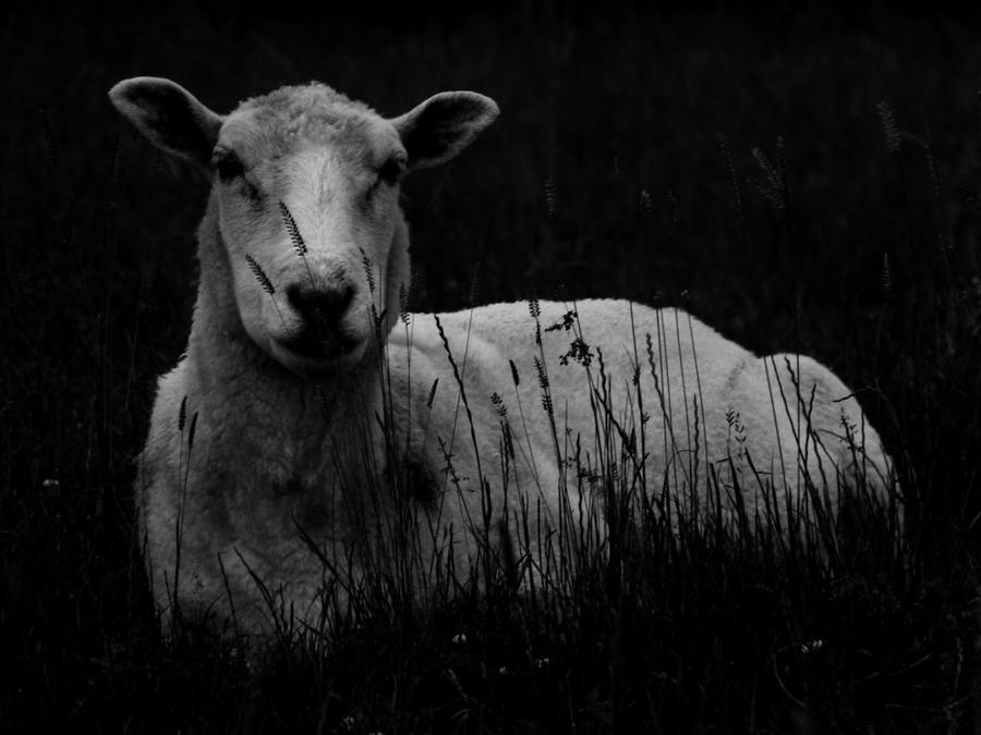Hey Ewe ... by MODDEYDOO
