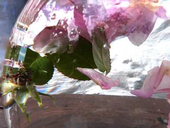 Under water rose petals