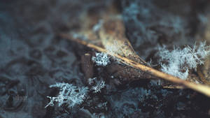 Winter's Delicate Malice by brandtcampbell