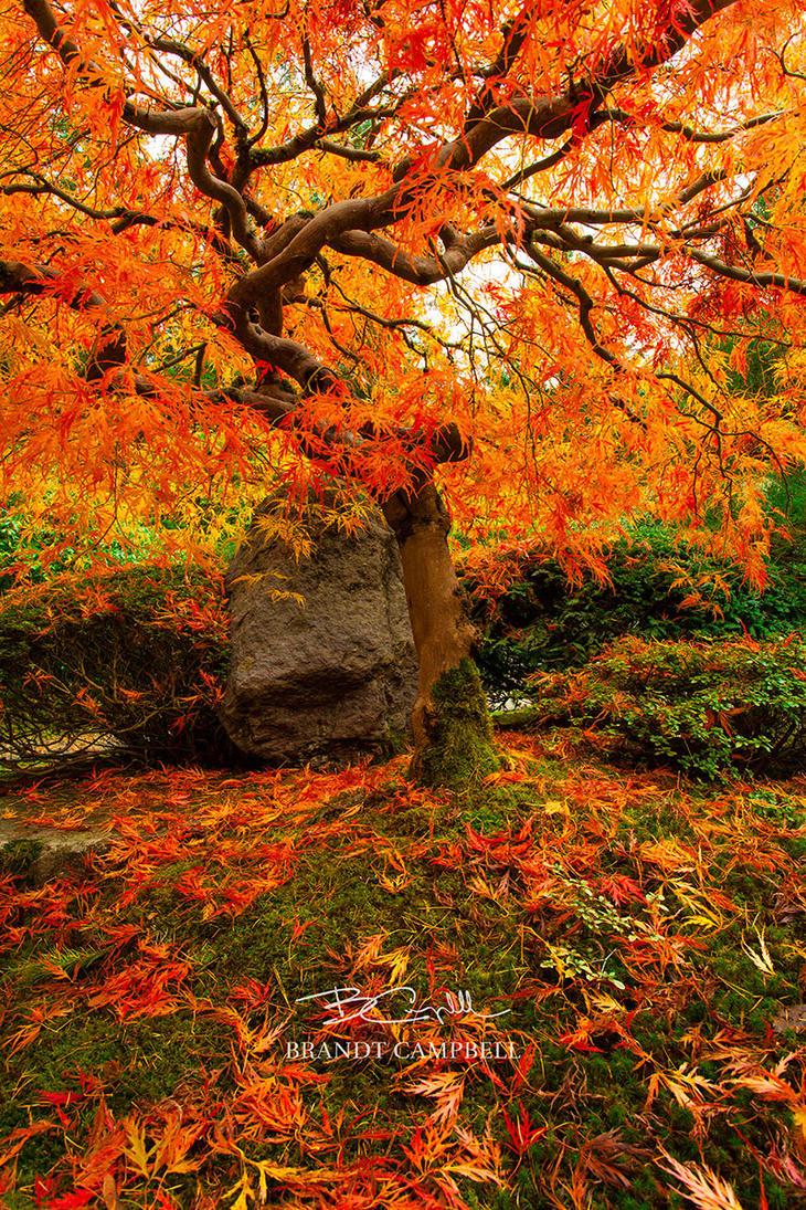 Autumn Ablaze by brandtcampbell
