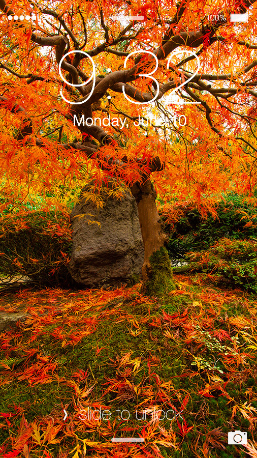 Autumn Japanese Maple 1080p Wallpaper By Brandtcampbell On