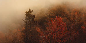 Autumn Petrichor