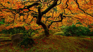 Flame of Autumn