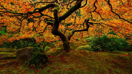 Flame of Autumn by brandtcampbell