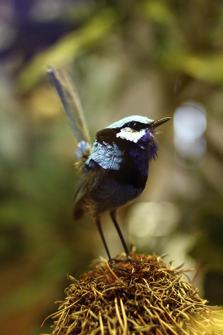 Birdie by barometri