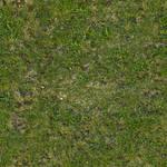 Seamless tileable grass texture