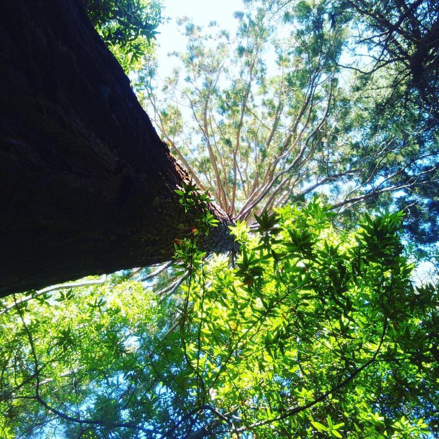 Redwood  by Stitch1290