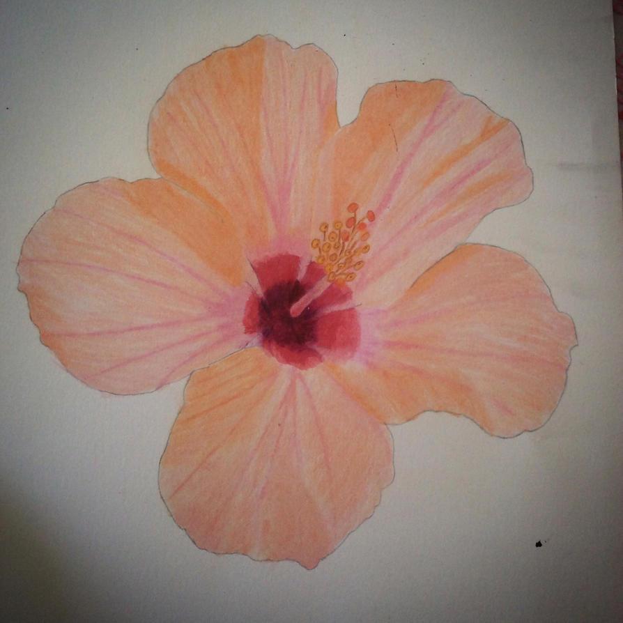 Hibiscus  by Stitch1290