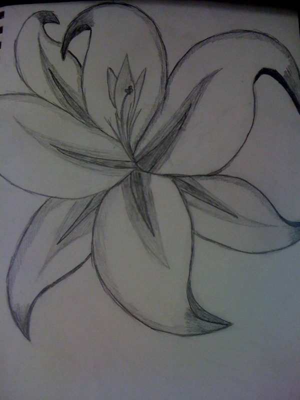 Images of flower picture to draw spacehero flower drawing by spacecaptainamaya on deviantart mightylinksfo
