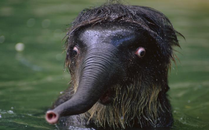 A very shocked elephant by MelodyPlainsWolf