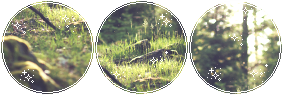 Peaceful forest - F2U Divider