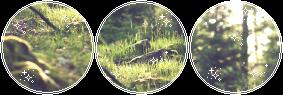 Peaceful forest - F2U Divider by FloffeyDog