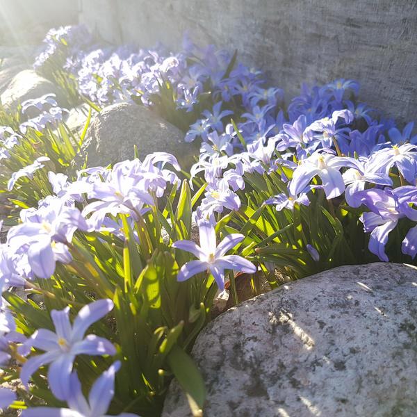 flower by sensiblelychee