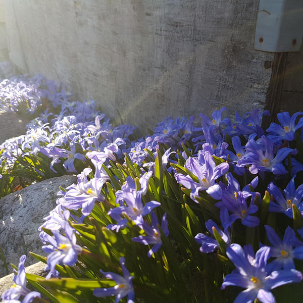 blue flowers by sensiblelychee