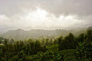 Fog On The Tea Fields 3. by bigzoso