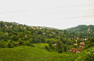 Tea Fields In Azaklihoca Village 2. by bigzoso