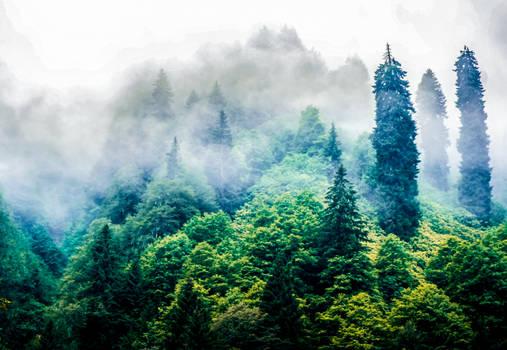 Misty Mountain.