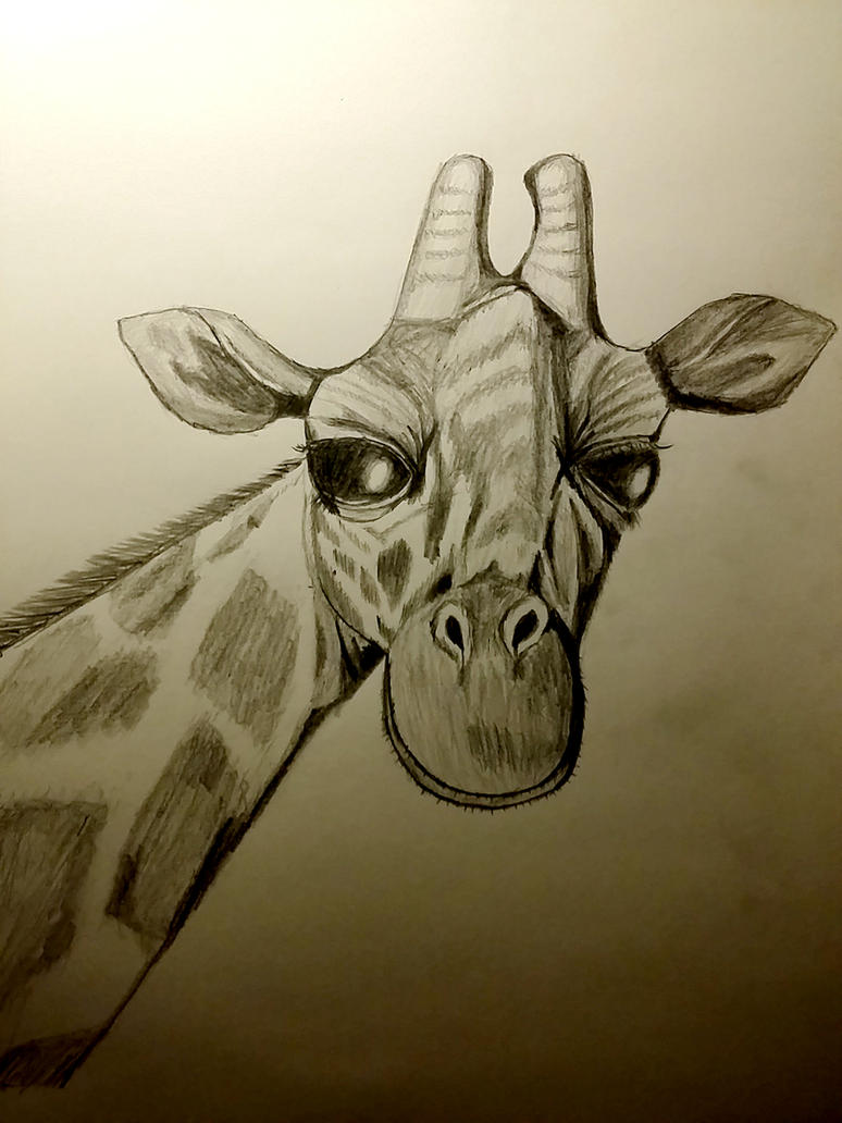 Pencil Copy Giraffe by kfthegnostic