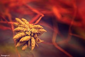 Wheat by Guidonr1