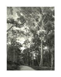 Bird's Land, Belgrave Heights by redmatilda
