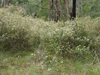Baluk Willam Reserve - Belgrave South by redmatilda