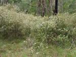 Baluk Willam Reserve - Belgrave South