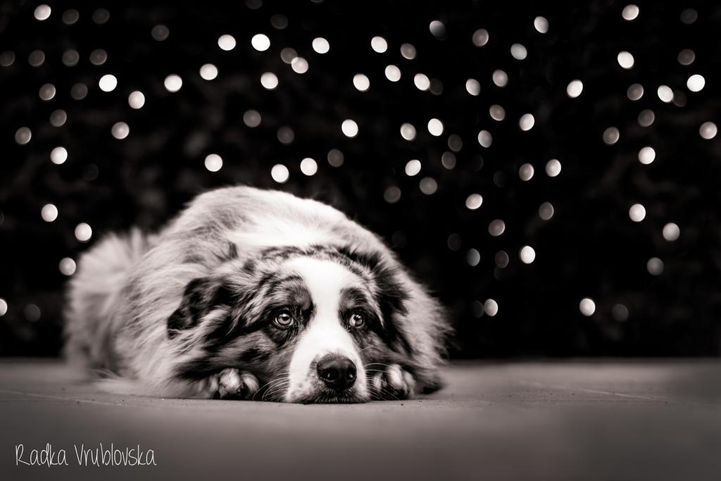 SADNESS by aussiefoto