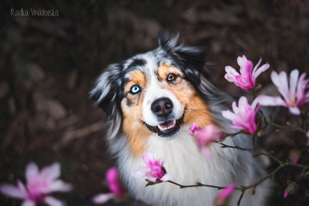Spring mood by aussiefoto