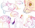 Rainbow-Animals